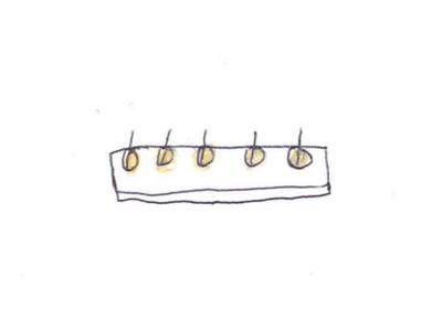 発芽の様子イラスト